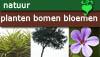 Thema natuur planten, bomen en bloemen